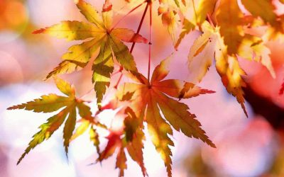 Autumn is here……